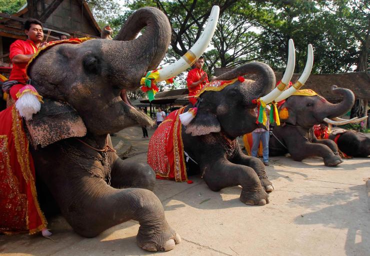 pc-thailand-national-elephant-day-02_c8f437ad6b204f1ab74cc42e63c2ae5d.jpg
